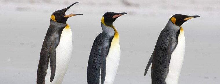 penguin-is-comming