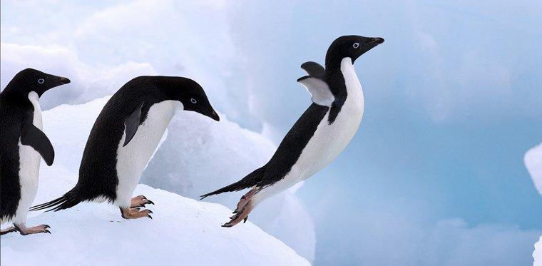 Pierwsze testy Penguin 3.0 trwają